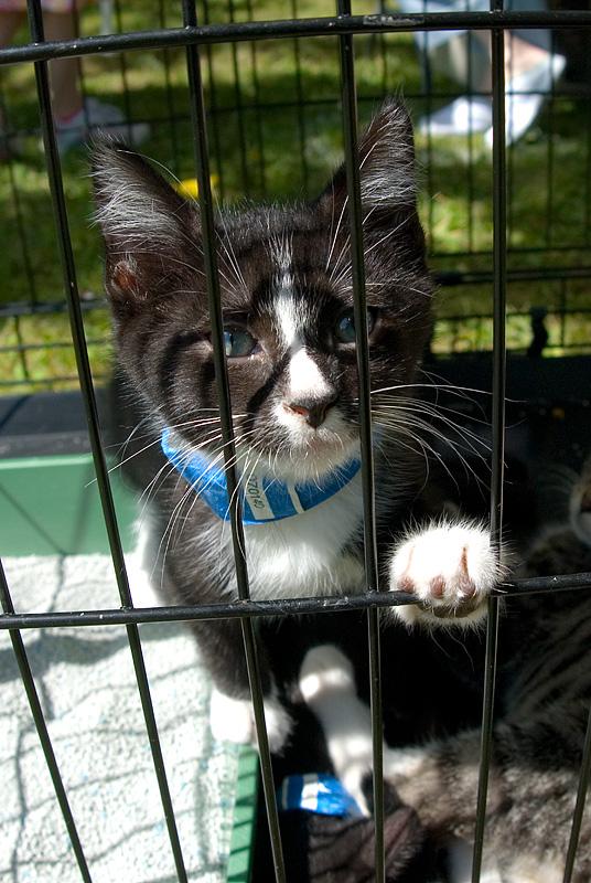 P.U.R.R. kitten