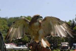 West Virginia Raptor Rehabilitation Center