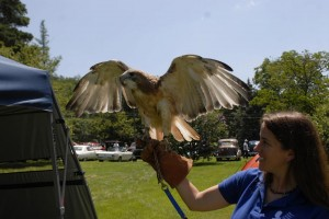 raptor rehab center